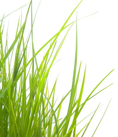 Enjeux du Bioéthanol